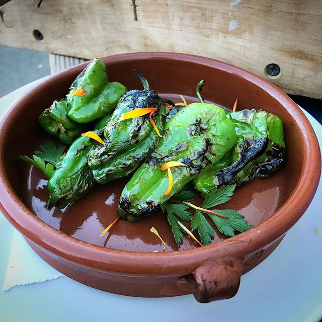 These dreamy blistered @wildwood_farm padrón peppers make a great addition to salad, pizza or just as a starter to your meal. You might even get a spicy one in the mix! 🌶🌶🌶 #peppers #pinestreethoodriver #yum