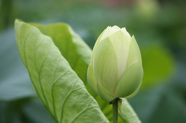 leaf-3136369_640.jpg