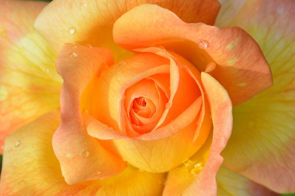flower-3037302_1280.jpg