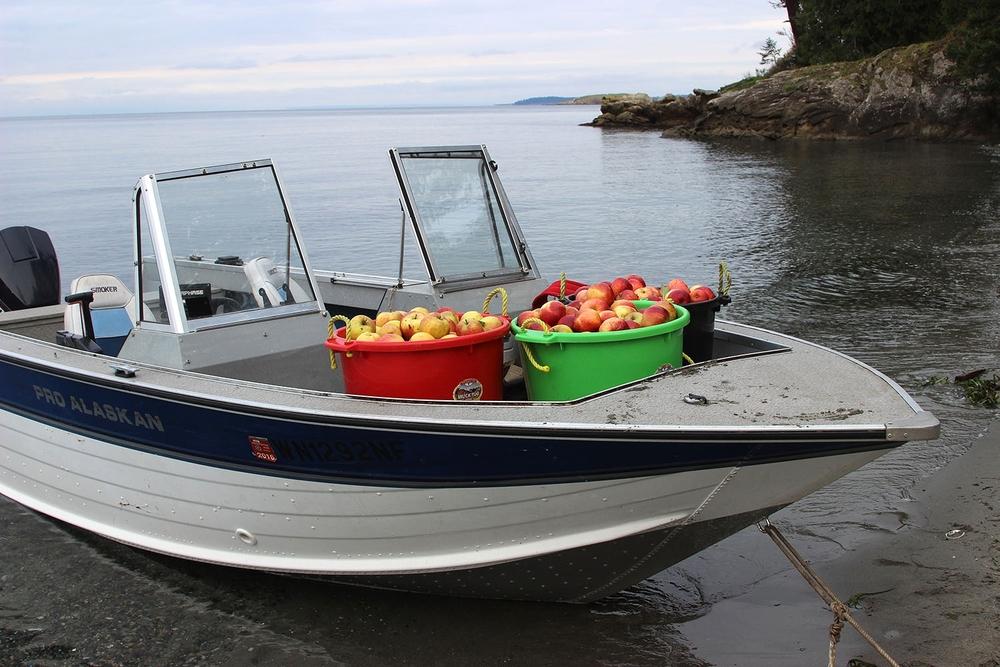 orcas_motorboat.jpg