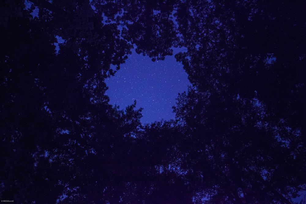 JRB_Nature_Portfolio_4.jpg