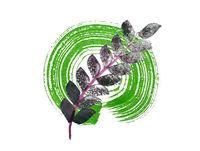 ruzbowl whirl