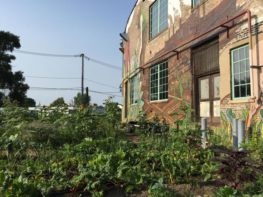 community garden at The Plant, Chicago.jpg