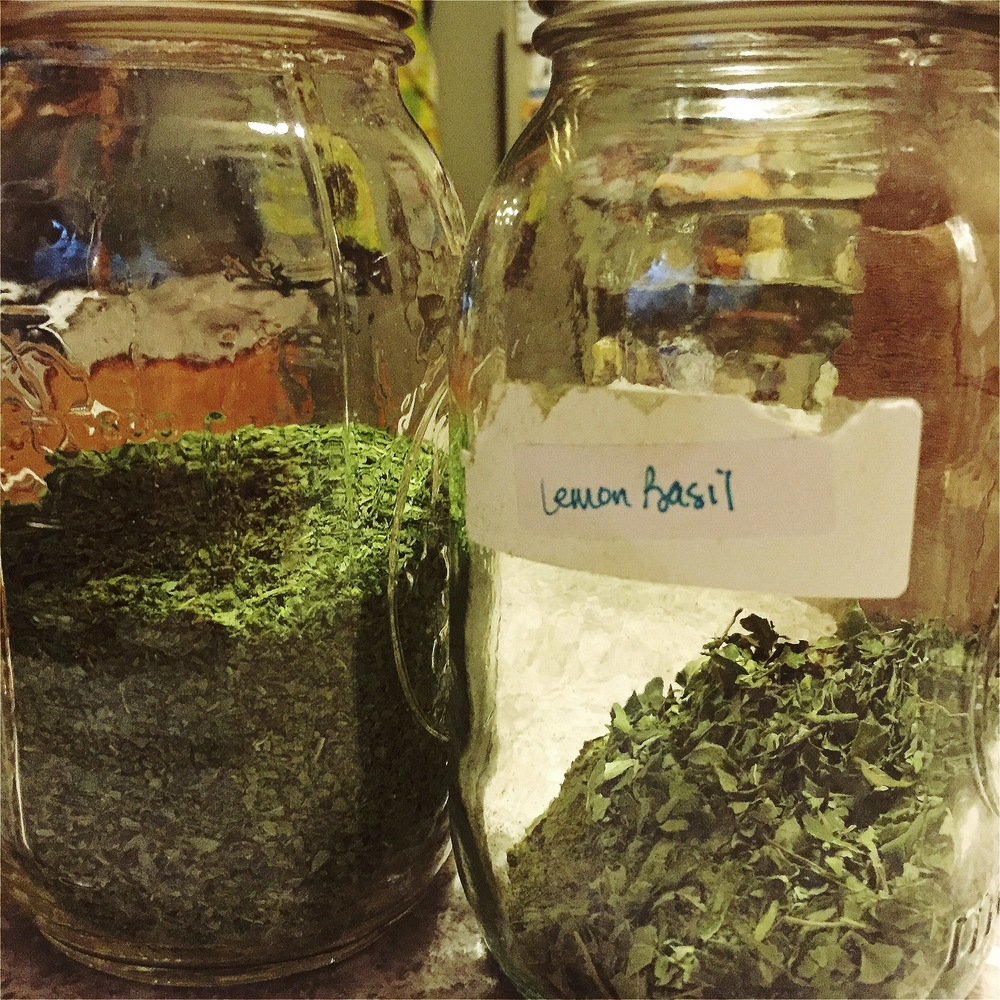 dried japanese mint on the left and lemon basil on the right