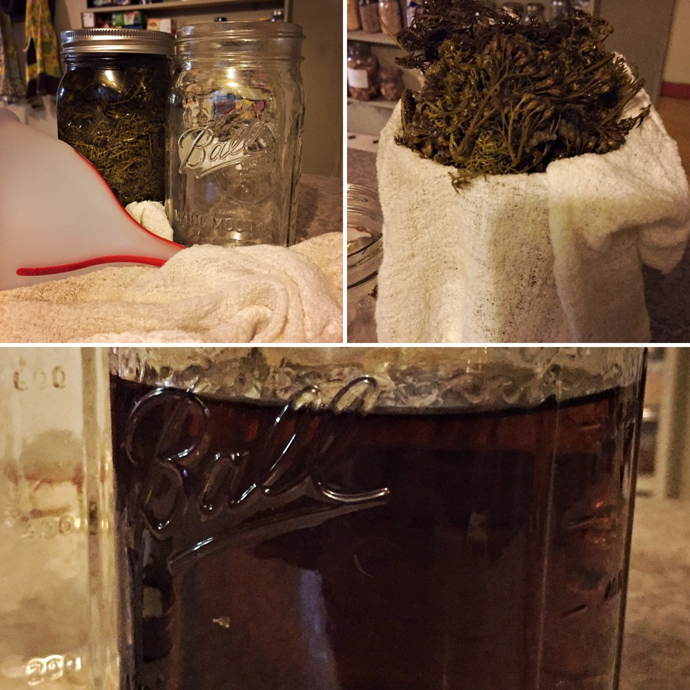 after tincturing for 6 weeks the yarrow leaves are strained through cheese cloth through a funnel into a fresh sterilized mason jar.