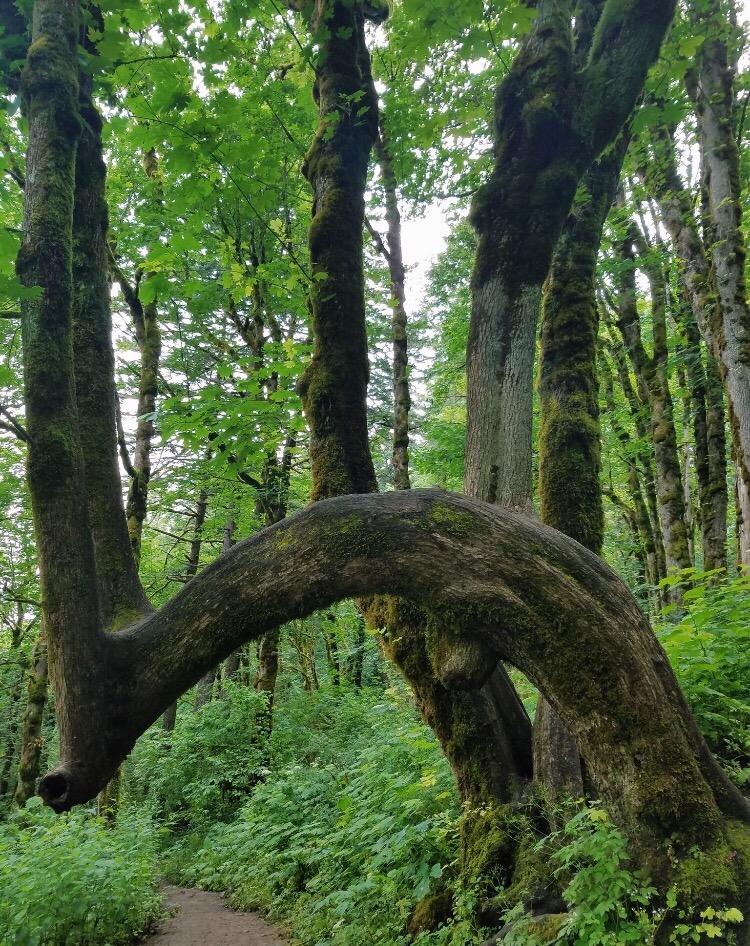 Overgrowth in Latourell