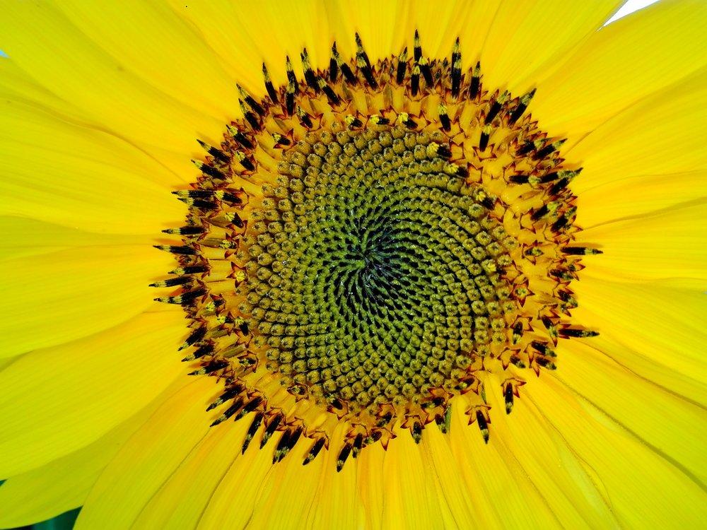 fibonacci-1599007.jpg