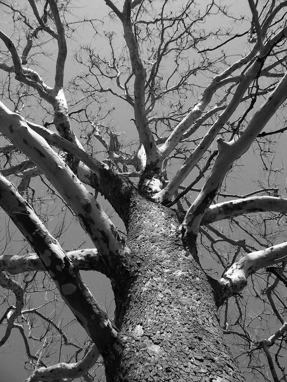tree-17708.jpg