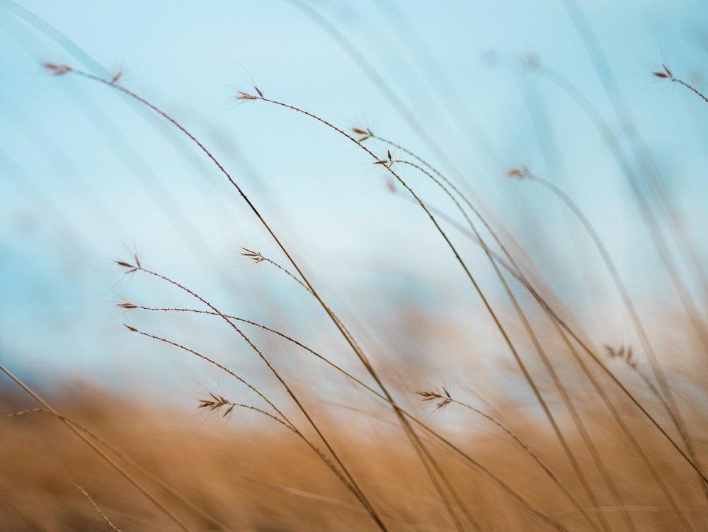 grass-mindful-communication.jpg