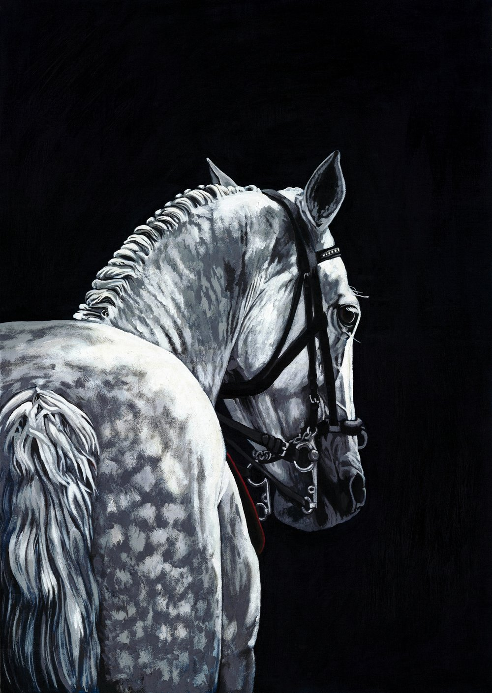 Classical dressage (sold)