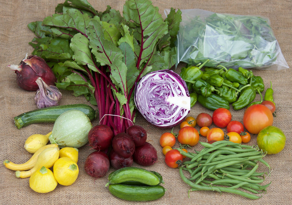 Sample $30 box from February 2017: zucchini and squash, garlic, red onion, beetroot, red cabbage, mesclun salad mix, padron peppers, heirloom tomatoes, green beans, and cucumbers.