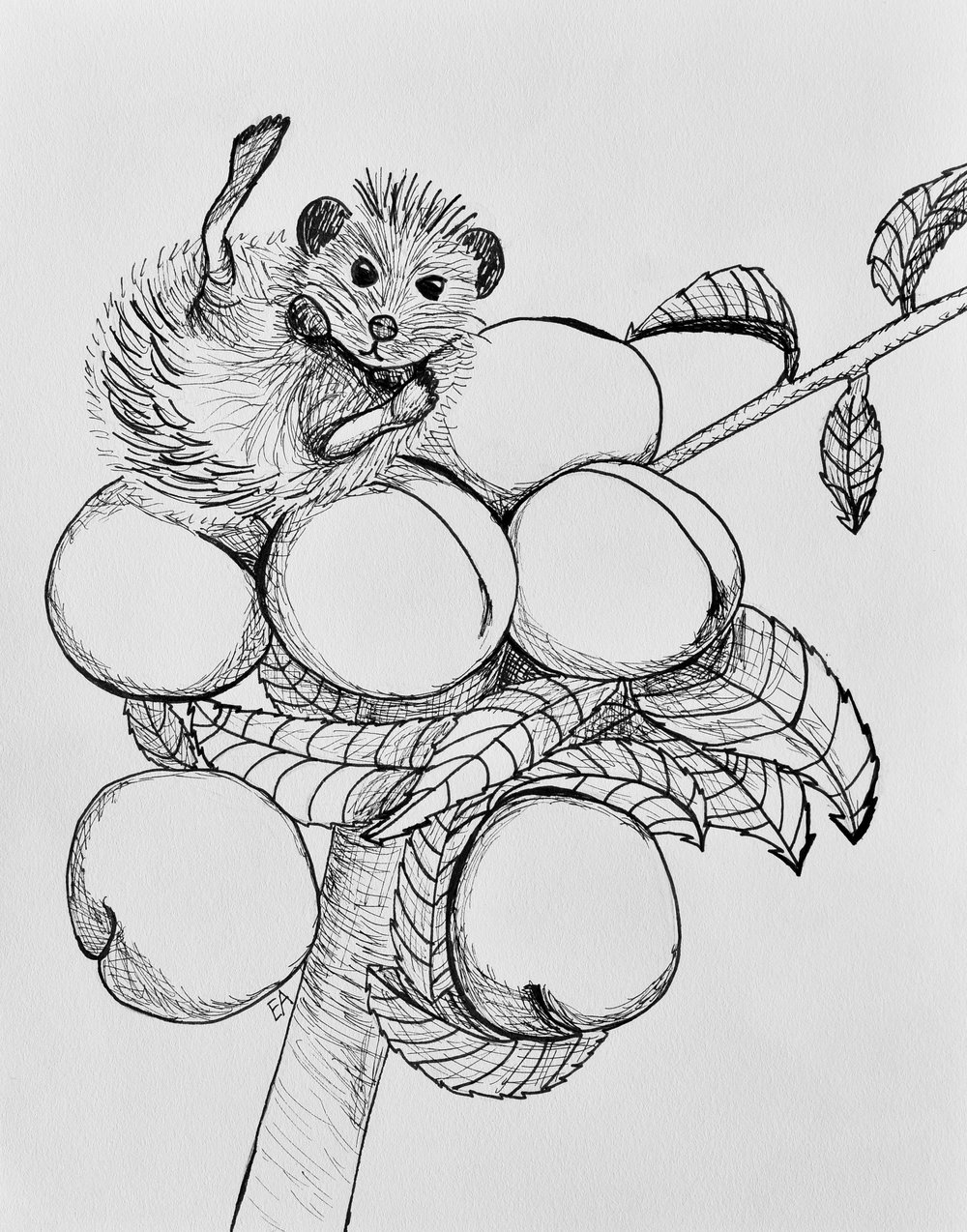 """Peachtree Hedgehog"" 8x10 Pen on Strathmore 400 series paper. SOLD."