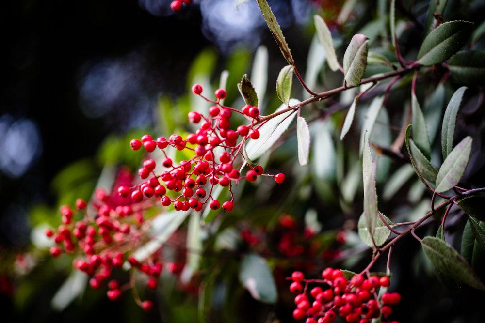 fall_foliage_nicolaparisi_0026.jpg