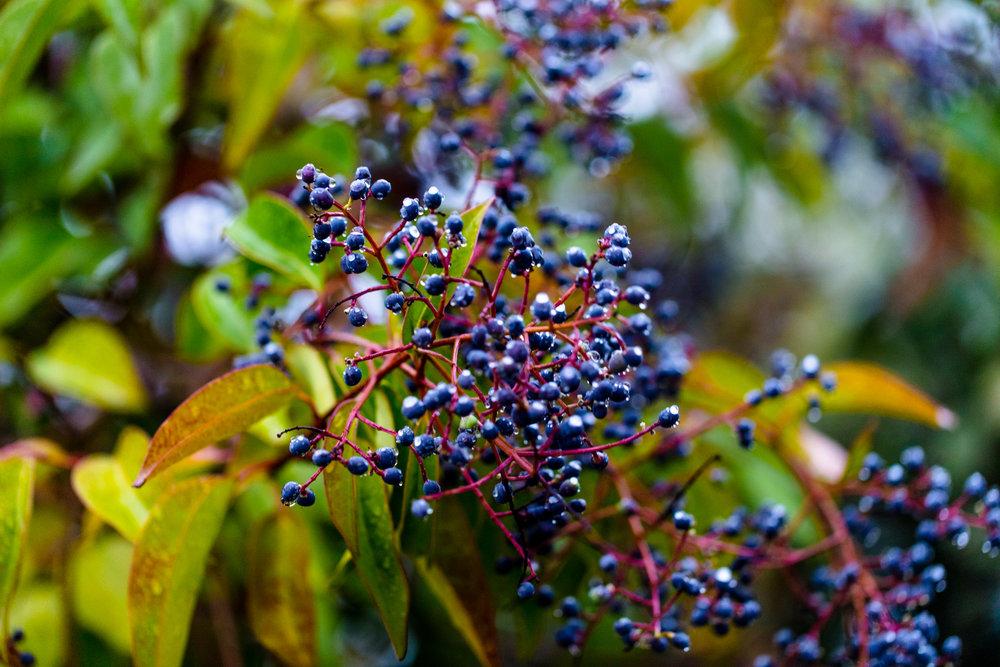 fall_foliage_nicolaparisi_0113.jpg