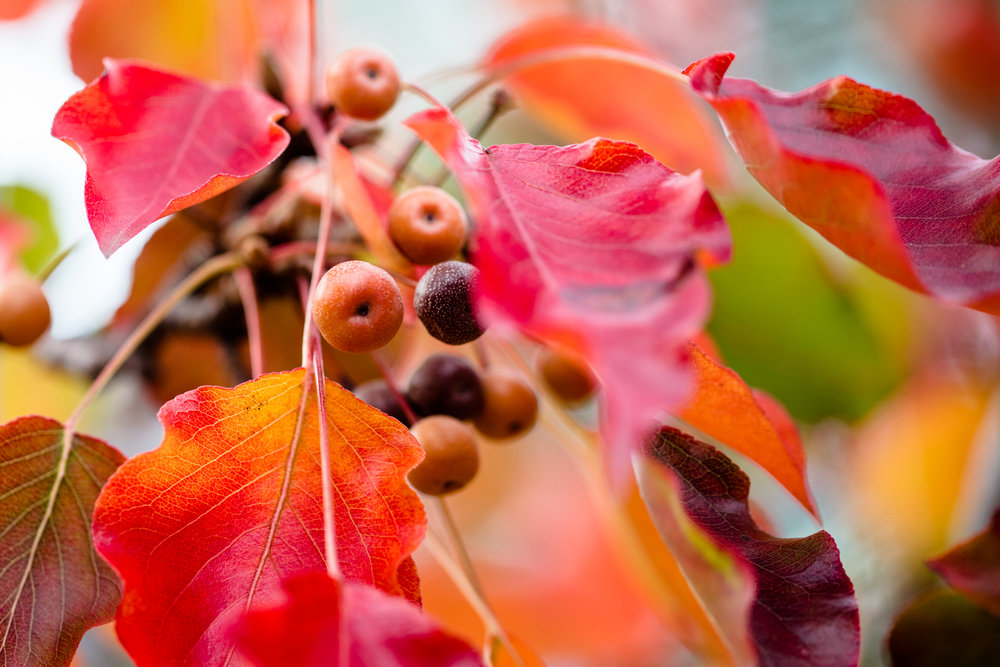 fall_foliage_nicolaparisi_0019.jpg
