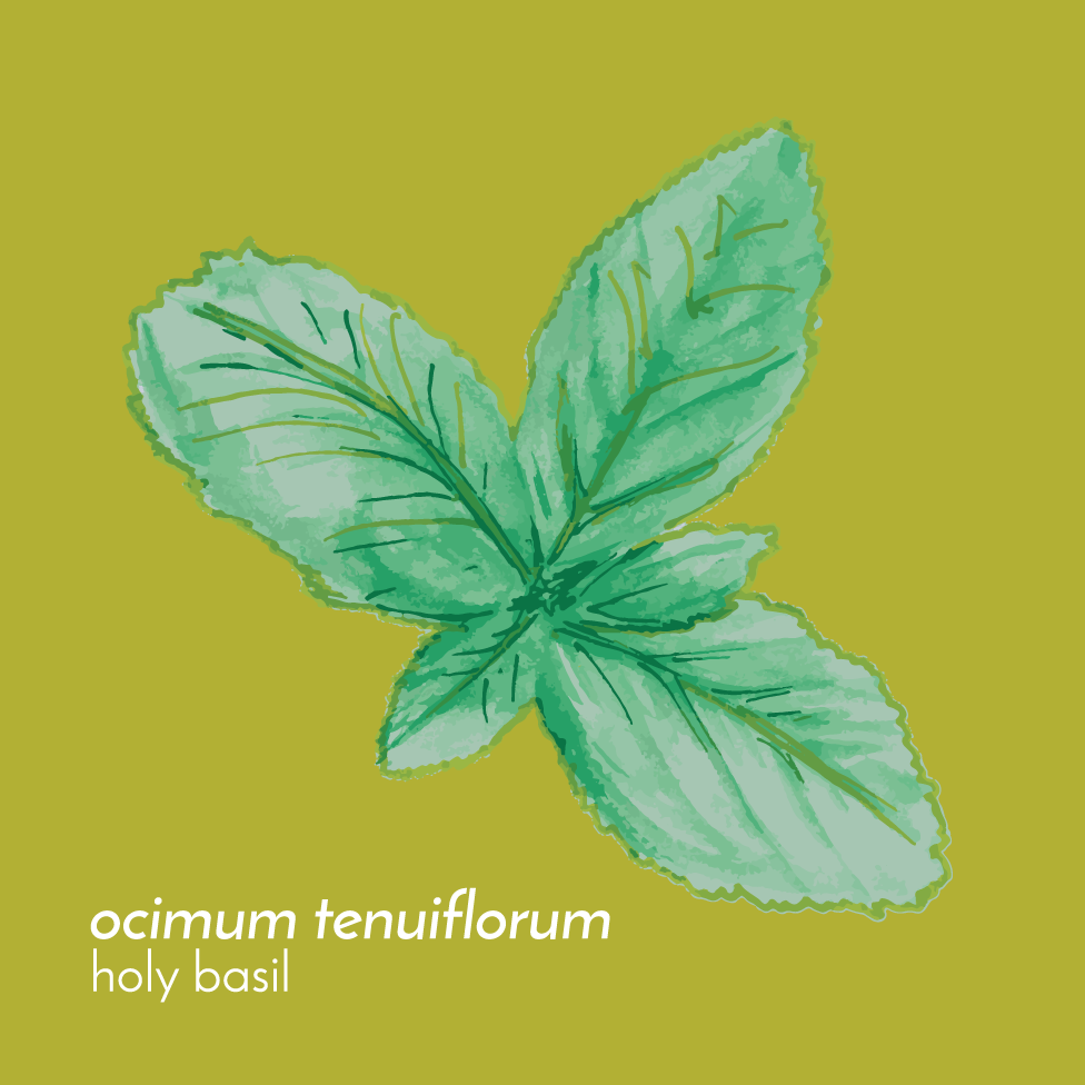 HolyBasilTincture-Front-01.png