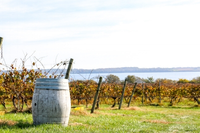 greenvale-winery-portsmouth-ri.jpg