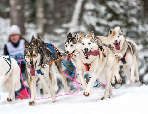 Koiravaljakkourheilu, LemppariSprintti / Heinola Lauantai 4. Maaliskuuta, 2017