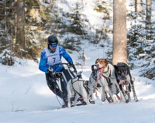 Koiravaljakkourheilu, LemppariSprintti / Heinola Sunnuntai 5. Maaliskuuta, 2017