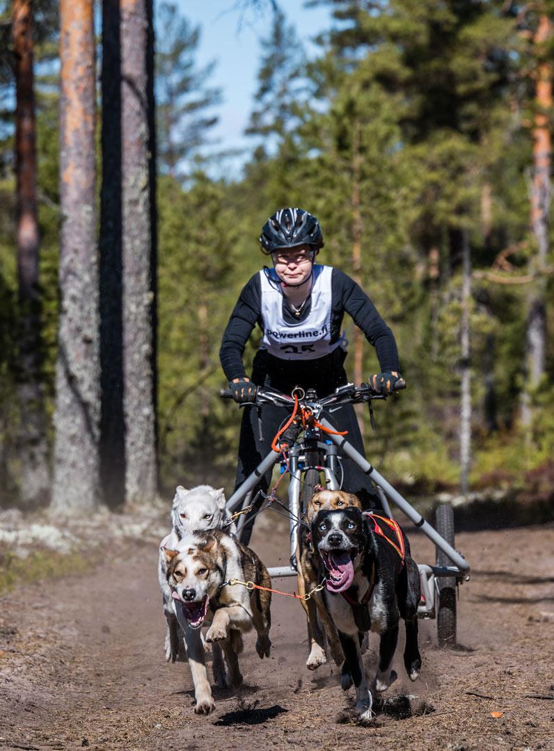 Ja sitten tulee valjakko jossa on sekä tumma että vaalea koira... jälkikäsittelyssä RAW kuvasta irtoaa kyllä yksityiskohdat tummankin koiran turkkiin kunhan vaan valotus on jotakuinkin kohdillaan jo kamerasssa.
