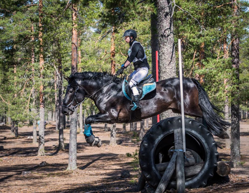 Mäntyjä, niitä on paljon, mutta kyllä nää komeat hevoset sinne mahtuu väliin.