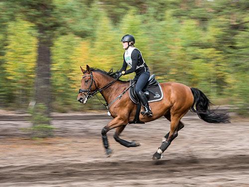 Kenttäratsastus: maasto / Niinisalo sunnuntai 17.9.2017