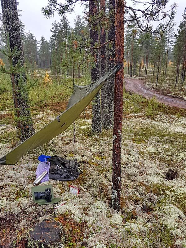 Tarpin kiinnitin suojaksi sekä DR8 että DR4->DS2 kuvauspaikoilla. Vettä tuli ajoittain niin runsaasti että lisäsuojaa oli pakko olla vaikka itse nyt toki vedenpitävissä tamineissa olinkin. Reppu on mukavampi aukaista sateensuojassa ja mielellään noita kameroitakin pitää pahimmalta suojassa. Tarpin kiinnittämiseen menee ehkä 2 minuuttia kunhan vaan löytää paikan jossa on sekä puut että kuvauspaikka sopivasti. Ei puita Jämiltä puutu, mutta ne ei aina oo hyvässä kuvauspaikassa.