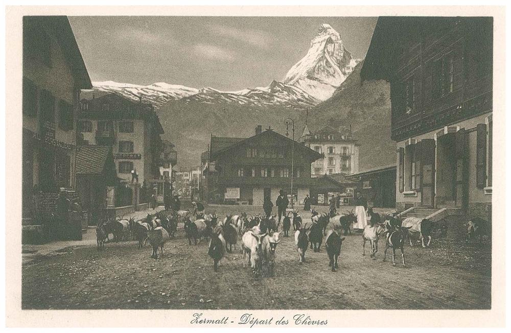 Depart des chevres Zermatt_2.jpg