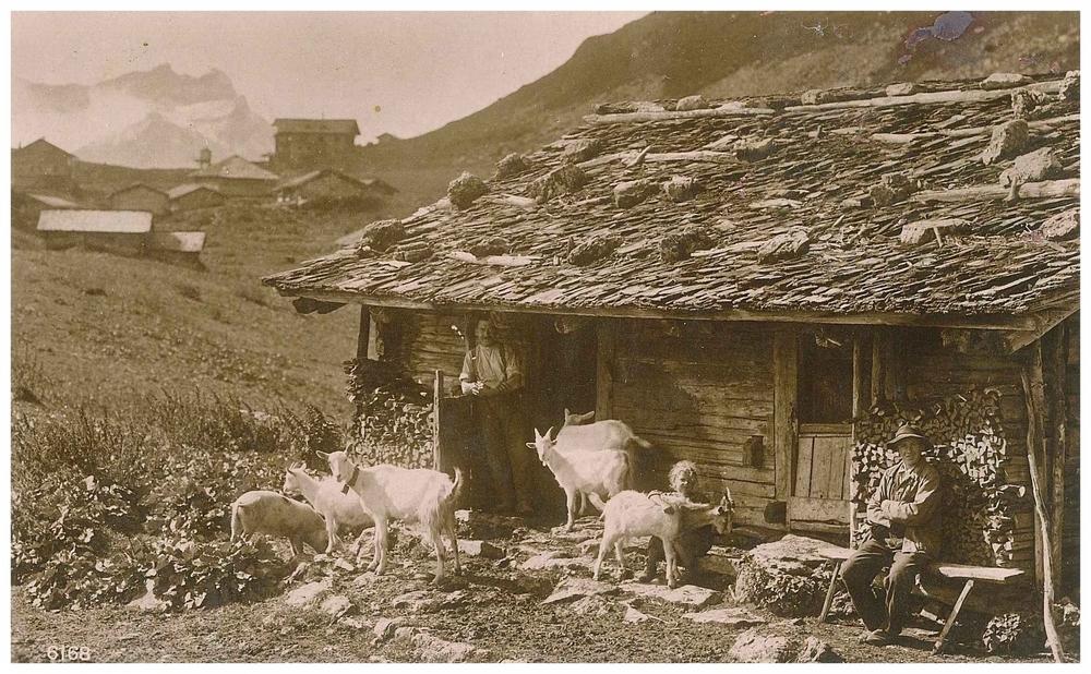 Ziegen vor Hütte ca.1921.jpg