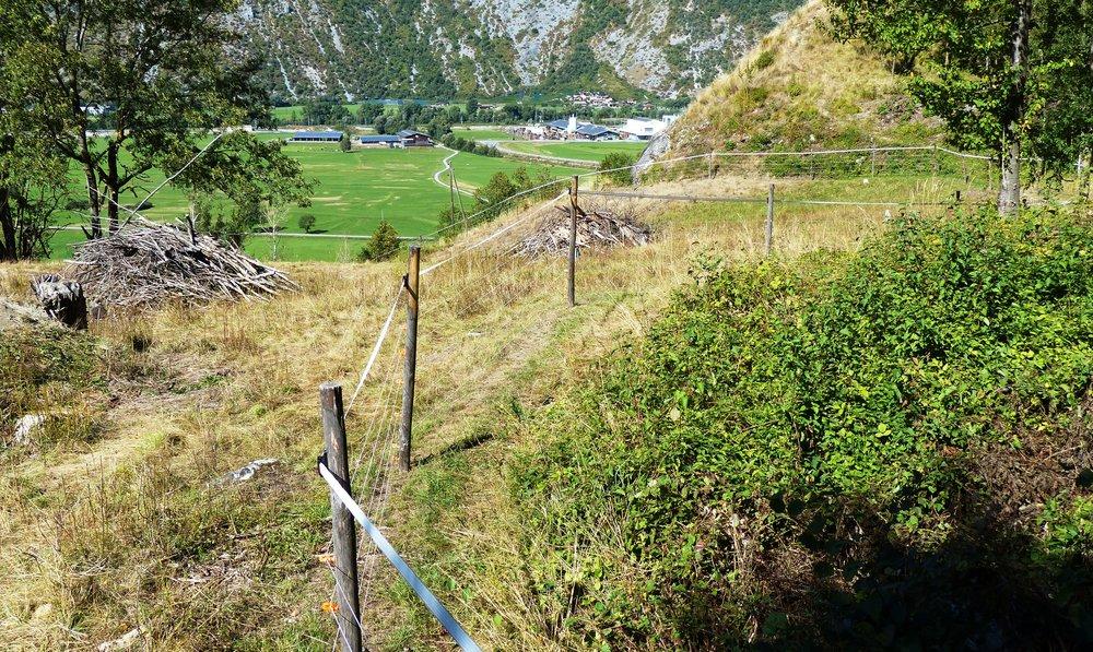 Starke Kontraste: Der Zaun trennt eine beweidete von einer unbeweideten Fläche.