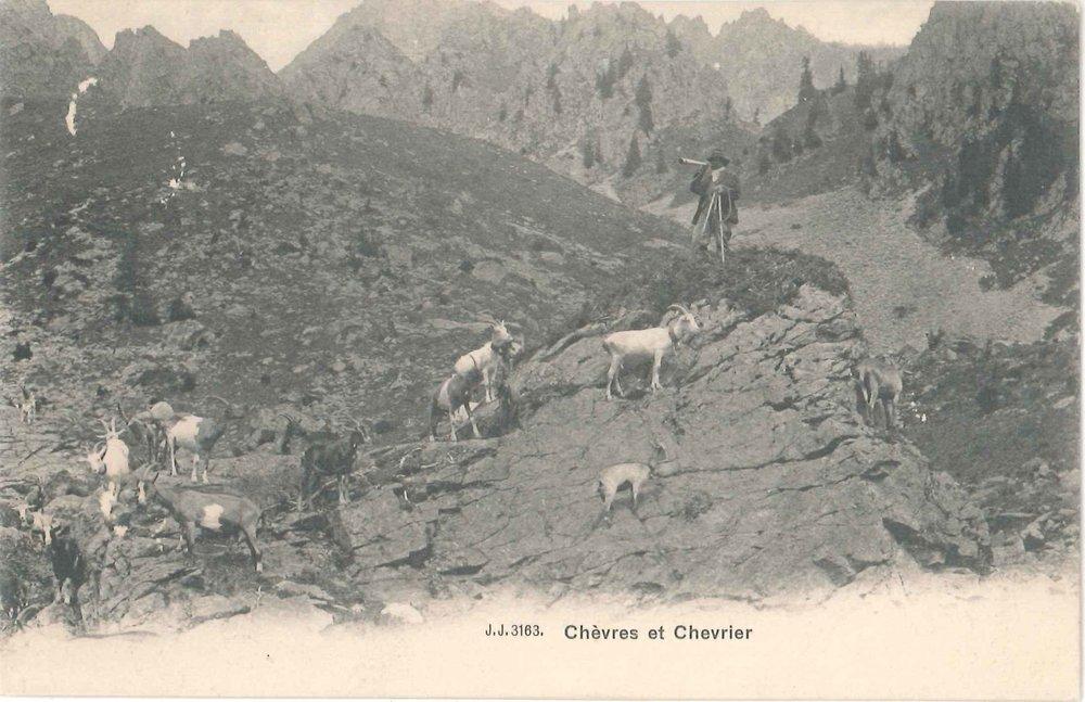 Chèvres et chevrier.jpg