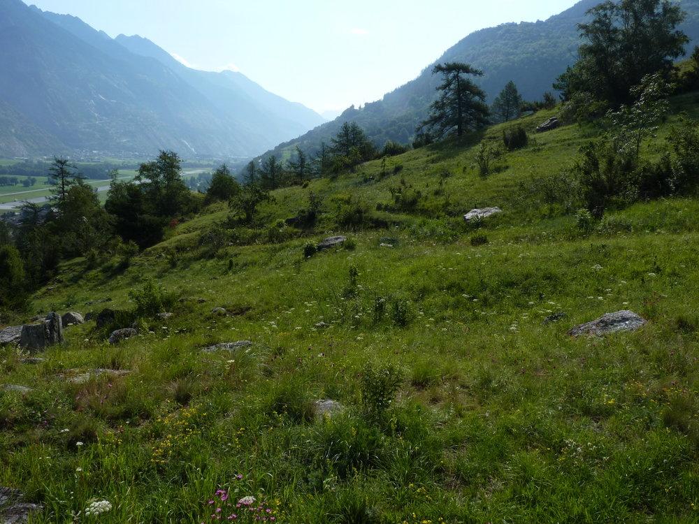 Terretsch_2012-07-05_2.JPG
