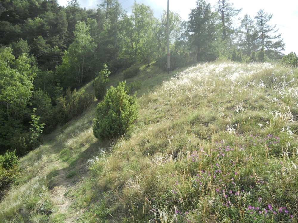 Steppe_Stipa-sp_Astragalus-onobrychis_Juniperus-communis.jpg