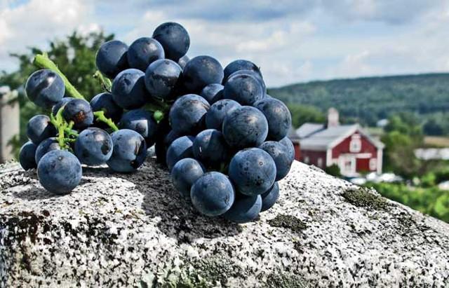 wineries-1.jpg