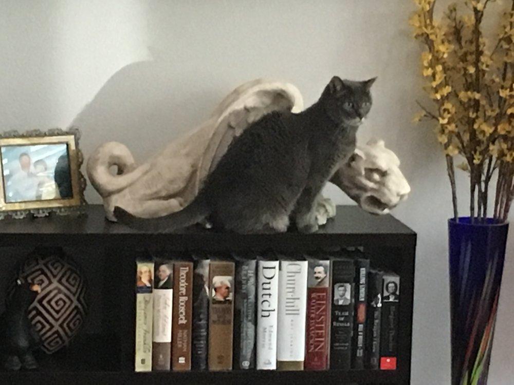 Deryl's Cat.JPG