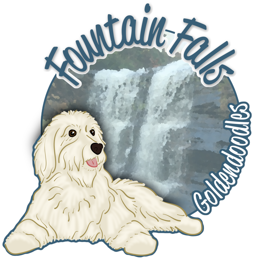 Lynne's Story — Fountain Falls Goldendoodles