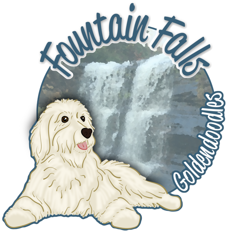 Fountain Falls Goldendoodles