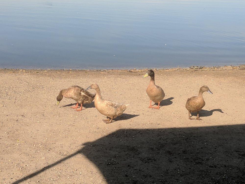 Duck Family.jpg