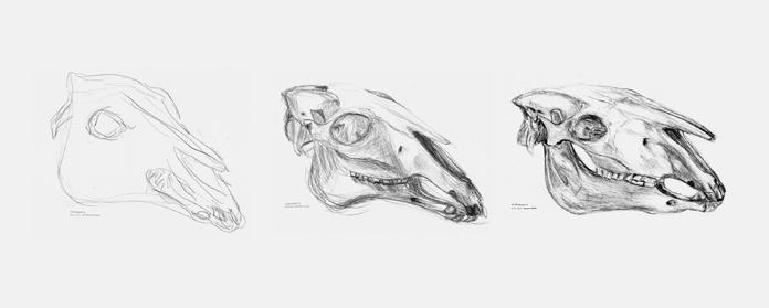 Studier af kranie, Gerrit Rietveld Academie, 2016.