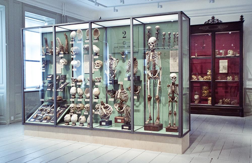 Medicinsk Museion | Foto: I DO ART Agency.