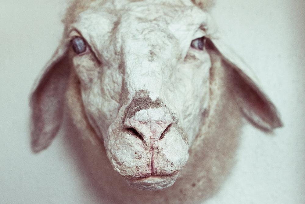 Kunstnermoster Jenni Tietze's fårehoved.