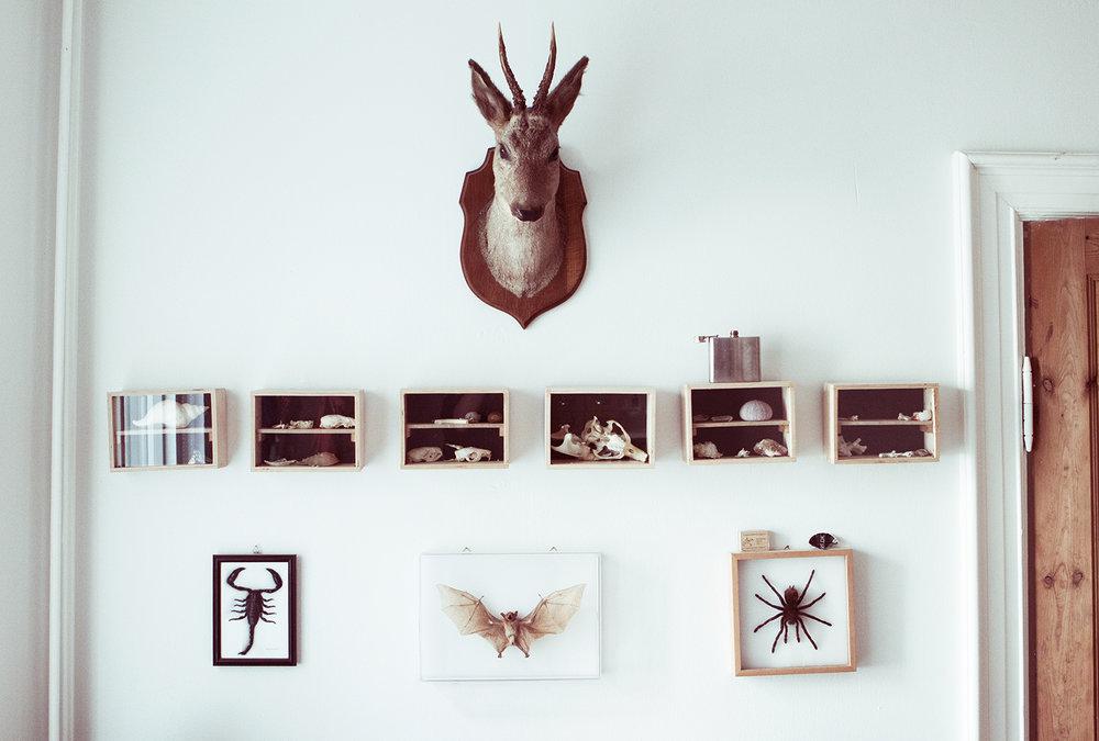 Væggen på Hans' værelse med de udstoppede dyr og selvpræparerede kranier.