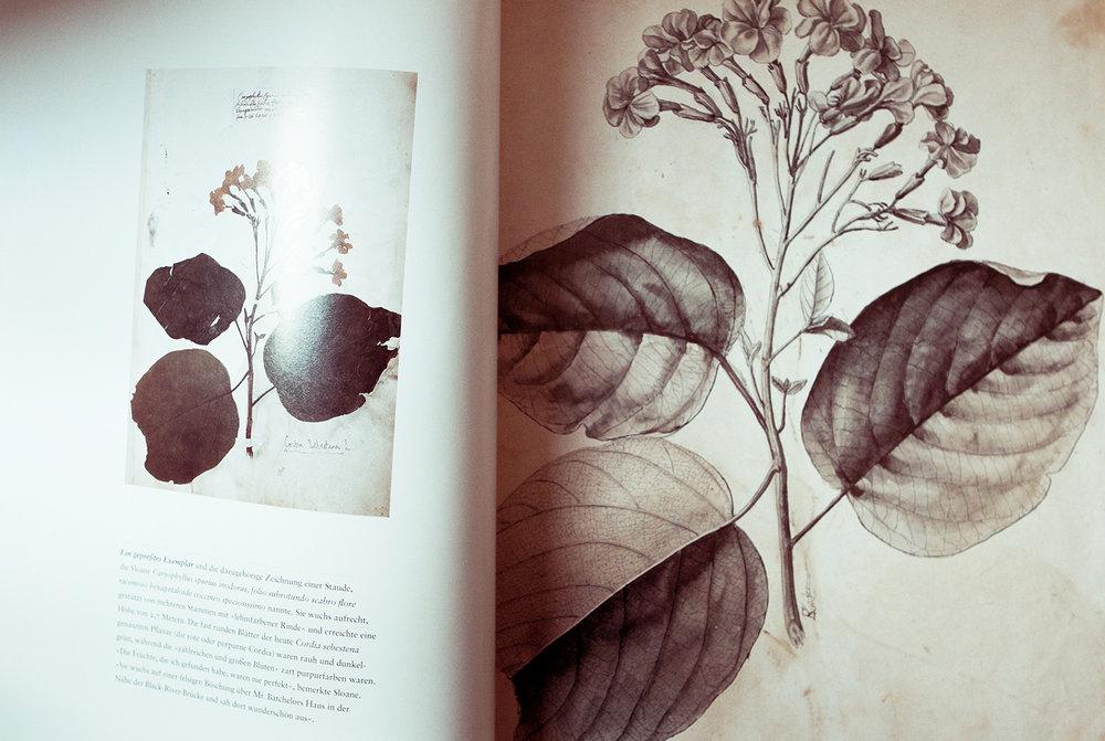 """Fra bogen """"Der Verzauberte Blick,"""" som er en af Hans' mange inspirationsbøger."""