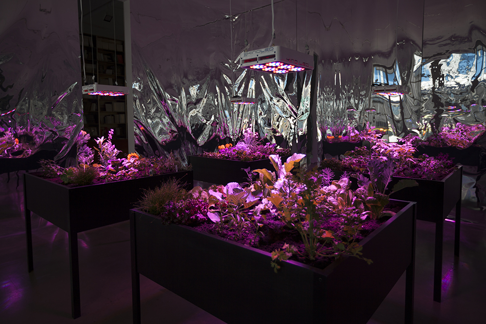 Meg Webster, Solar Grow Room, 2016 © Meg Webster. Courtesy Paula Cooper Gallery, New York. Photo: Steven Probert.