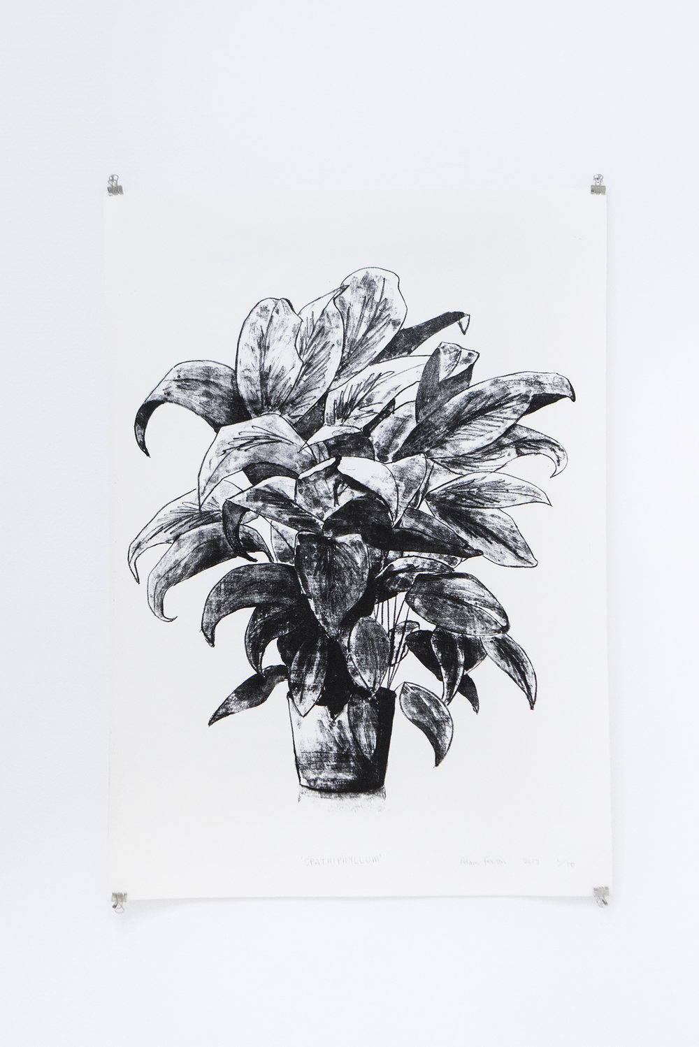 "Adam Fenton ""Spathiphyllum"", 2017 (litograph on paper, 64x44.5cm) 