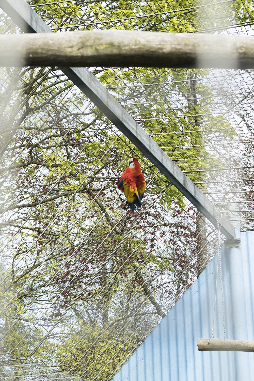 En papegøje forsøger at bide sig igennem tremmerne | Foto: I DO ART Agency.