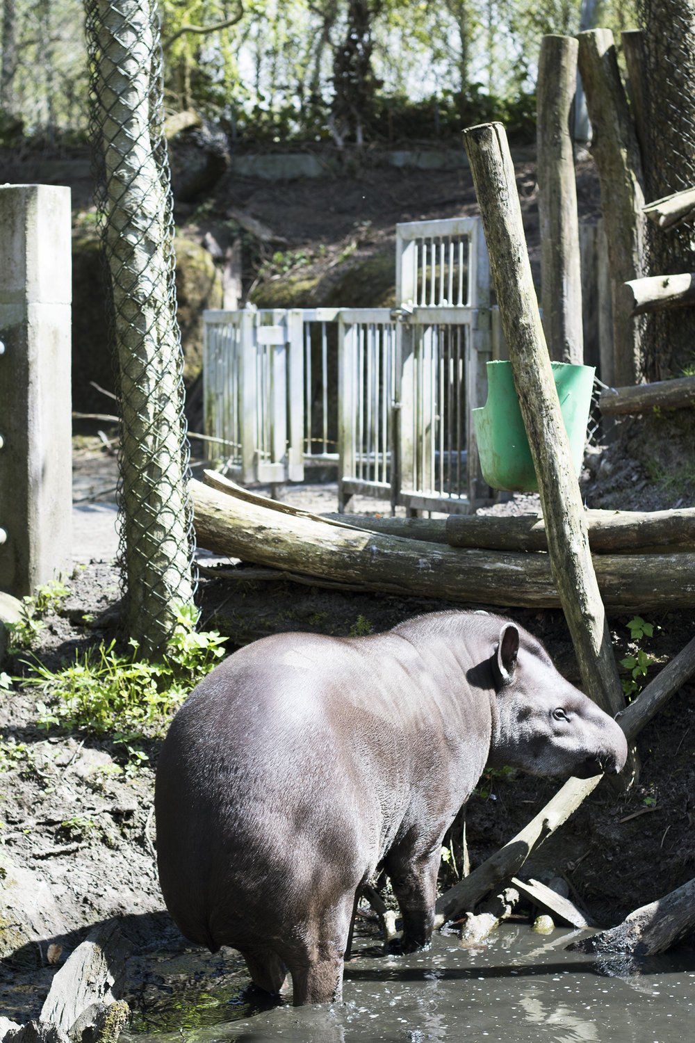 Tapir | Foto: I DO ART Agency.