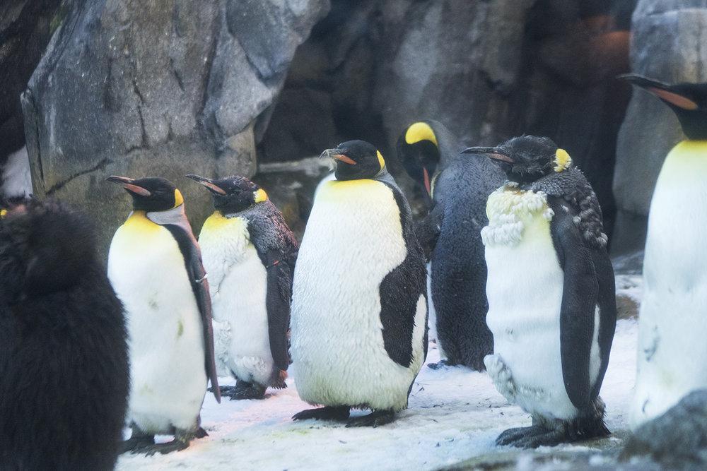 Pingviner man bliver ked af at se på | Foto: I DO ART Agency.