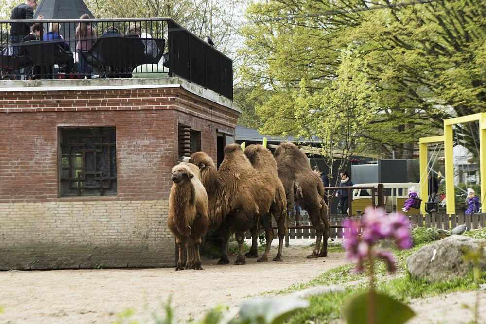 Kameler fanget mellem gyngestativer og madpakker | Foto: I DO ART Agency.