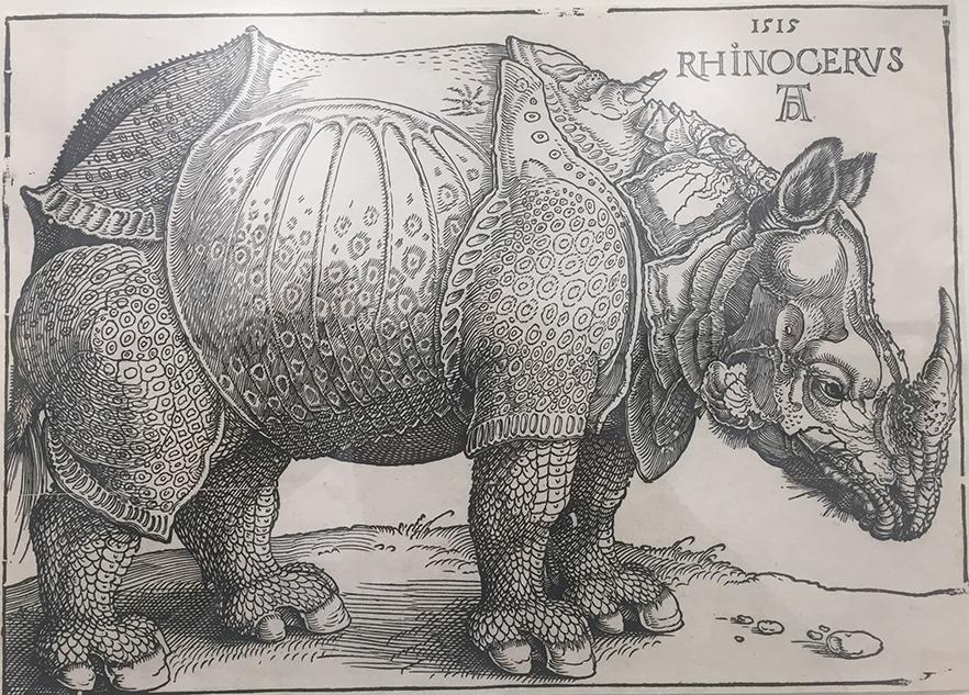 Albrecht Dürer's woodcut Rhinocerus from 1515.